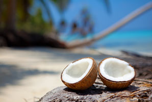 Beetle bacteria could save our coconuts