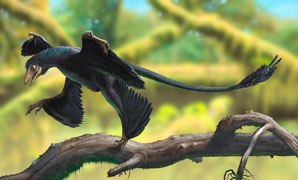 Shedding light on dinosaur dandruff