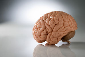 How folds form on the brain surface