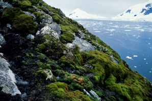 Polar plant life perturbed as East Antarctica dries out