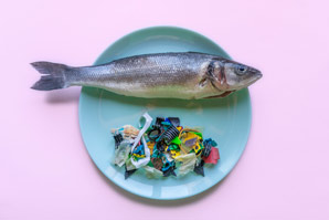 Chemical analysis reveals microplastic concentrations in seafood